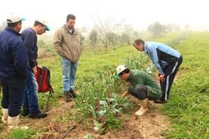 Agroflorestas da Cooperafloresta