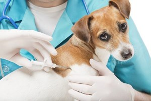 Cachorro sendo testado pela indústria