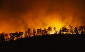 floresta pegando fogo